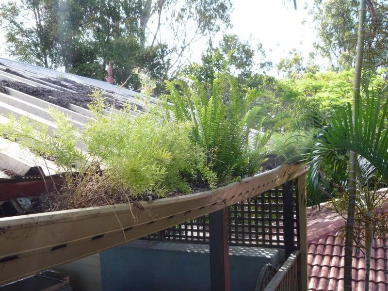 Plants growing in gutters
